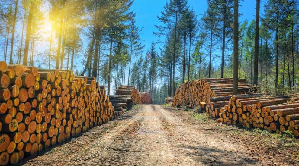 Assessing Future Forest Supplies and Wood Markets for Timberland Owners