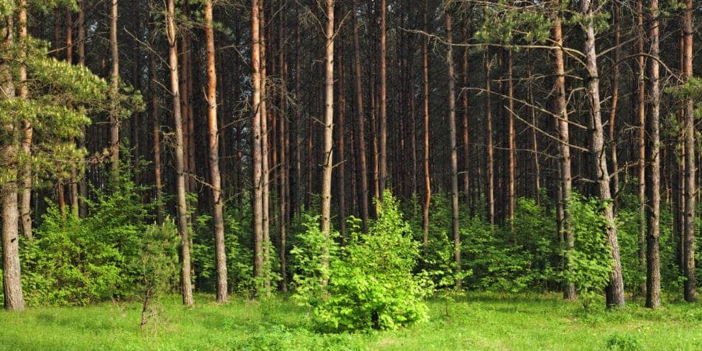 How should a landowner sell his timber?