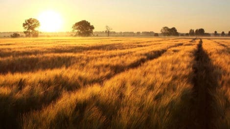 LANDTHINK Pulse: The Land Market Is Better Than It Was a Year Ago