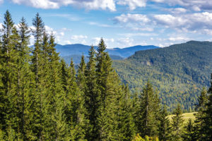 Risk and Uncertainty Top Forest Industry Concerns in Q3 2020