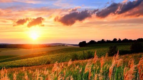 Robust Land Market Propels LANDFLIP to Record Growth