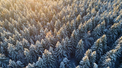 Tumultuous 2018 for Timber REITS Creates Opportunities for 2019